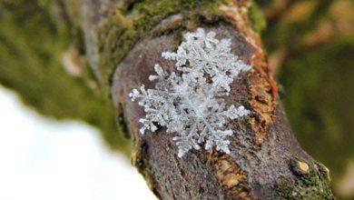 1134380_536-390x220 حقایق ناشنیده و جالب از فصل زمستان دانستنی های علمی دانش و فناوری   وردنگار