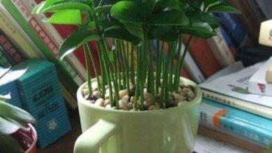 Green-seeds-Lemon-orange-2-390x220 آموزش سبزه جدید عید نوروز با هسته مرکبات سرگرمی   وردنگار