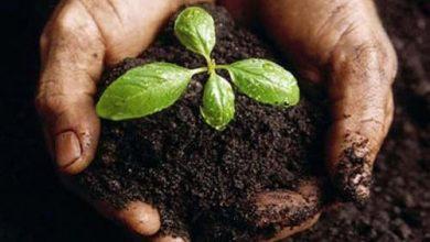 bio-organic-manure-500x500-390x220 کود می تواند خانه هایتان را گرم کند جالب ترین ها دانستنی های علمی دانش و فناوری سبک زندگی سرگرمی مهارت های زندگی   وردنگار