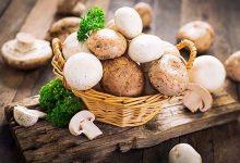 featured-19-750x490-220x150 فواید سلامتی مصرف قارچ برای بدن و پیشگیری از بیماری ها تغذیه سالم سلامت   وردنگار