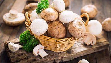 featured-19-750x490-390x220 فواید سلامتی مصرف قارچ برای بدن و پیشگیری از بیماری ها تغذیه سالم سلامت   وردنگار