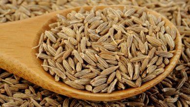 cumin01-390x220 6 فایده زیره برای سلامتی بدن آشپزی تغذیه سالم سلامت   وردنگار