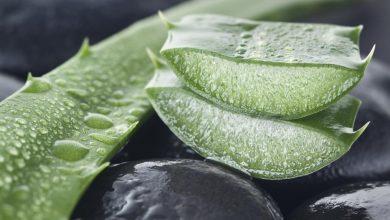 cut-aloe-vera-for-psoriasis-390x220 استفاده آلوئه ورا برای درمان پسوریازیس داروها و کاربردها سلامت مطالب سلامت   وردنگار