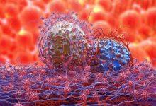 dividing-cancer-cells-220x150 داروهای مالاریا می تواند به مبارزه با سرطان کمک کند داروها و کاربردها سلامت   وردنگار