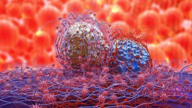 dividing-cancer-cells-390x220 داروهای مالاریا می تواند به مبارزه با سرطان کمک کند داروها و کاربردها سلامت   وردنگار
