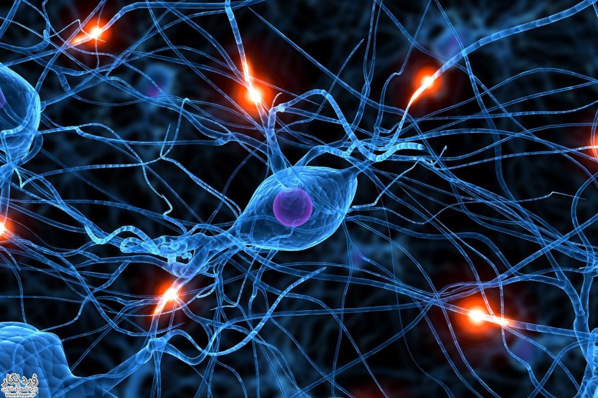 maghz چگونه حافظه خود را تقویت کنیم؟ تغذیه سالم سلامت   وردنگار