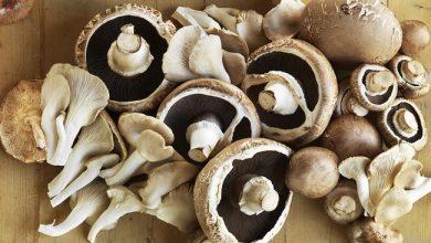 mushrooms-gettyimages-466713631-main-390x220 چالش 30 روز غذای سالم: قارچ و افزایش ایمنی بدن آشپزی تغذیه سالم سلامت غذاهای گیاهی   وردنگار