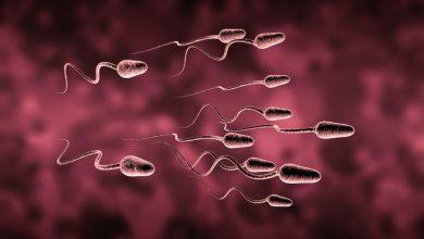 natural-ways-to-increase-sperm-count-390x220 تحرک اسپرم چگونه بر باروری تاثیر می گذارد؟ بارداری و زایمان دانستنی های جنسی سبک زندگی سلامت   وردنگار
