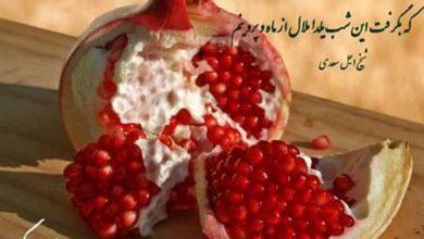 yalda-390x220 عکس نوشته و متن های تبریک شب یلدا ادبیات سرگرمی   وردنگار